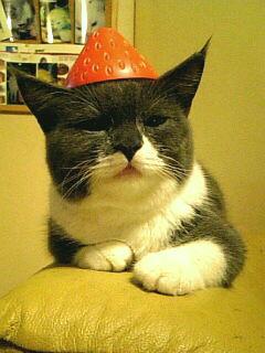 イチゴ猫の行方…