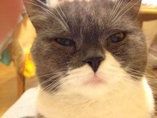 猫だって被災者。。