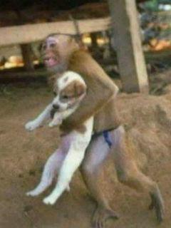 犬猿の仲〜☆