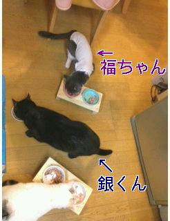 今年は明るく〜お祝い☆