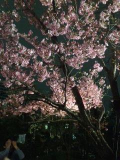都内の夜桜〜プチ・ショック♪